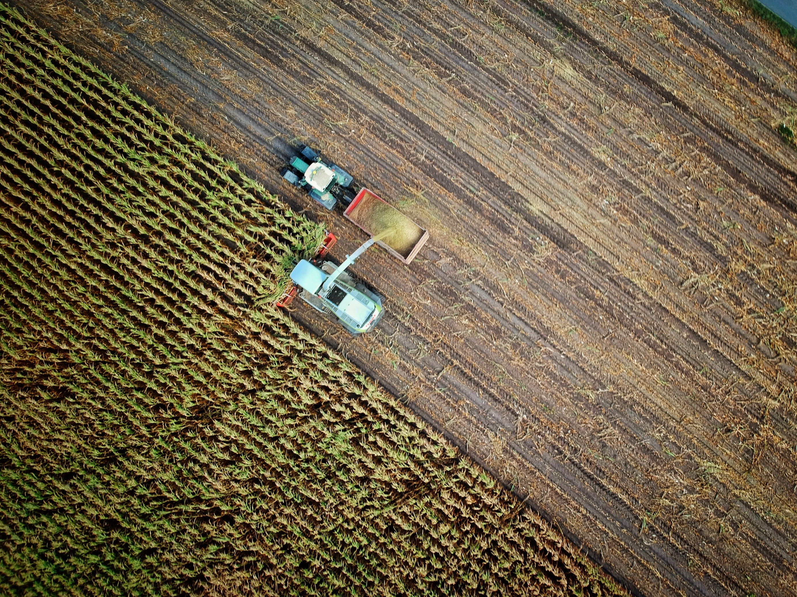 Aerial view of farmer collecting crops